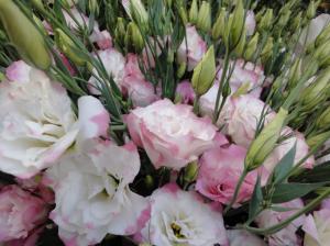 Эустома№1 цветы и букеты с доставкой по Горловке