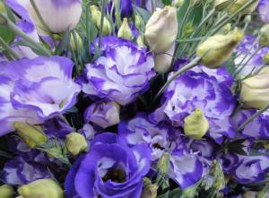 Эустома цветы и букеты с доставкой по Горловке