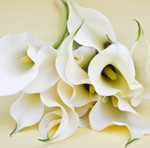 Калла цветы и букеты с доставкой по Горловке