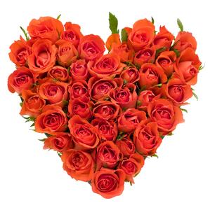Оранжевое лето цветы и букеты с доставкой по Горловке