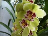 Орхидея№2