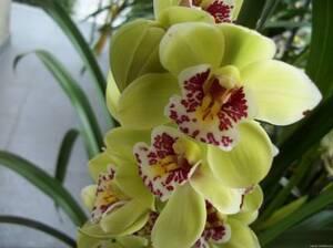 Орхидея№2 цветы и букеты с доставкой по Горловке
