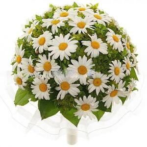 Ромашковое поле цветы и букеты с доставкой по Горловке