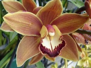 Орхидея№1 цветы и букеты с доставкой по Горловке