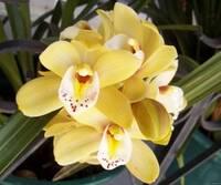 Орхидея№4