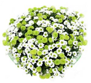 Весенняя нежность цветы и букеты с доставкой по Горловке