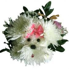 Лахматун цветы и букеты с доставкой по Горловке