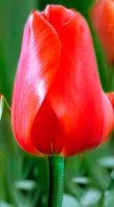 Лалибела цветы и букеты с доставкой по Горловке