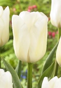 Мисс Медведева цветы и букеты с доставкой по Горловке