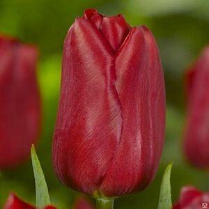 Strong Love цветы и букеты с доставкой по Горловке