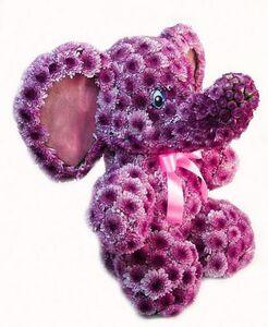 Слоник цветы и букеты с доставкой по Горловке